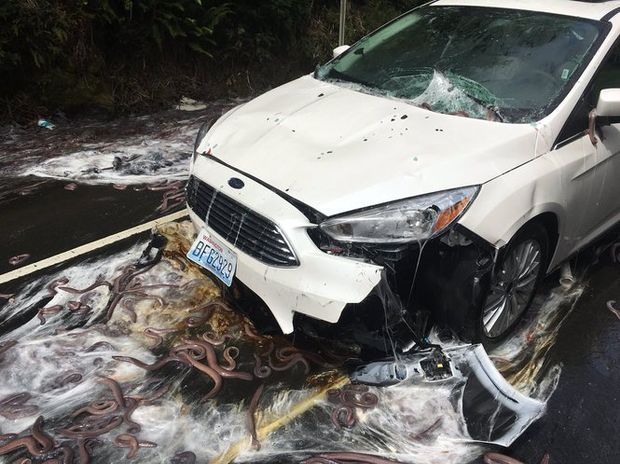 Not just eels: 15 weirdest roadway spills in Oregon