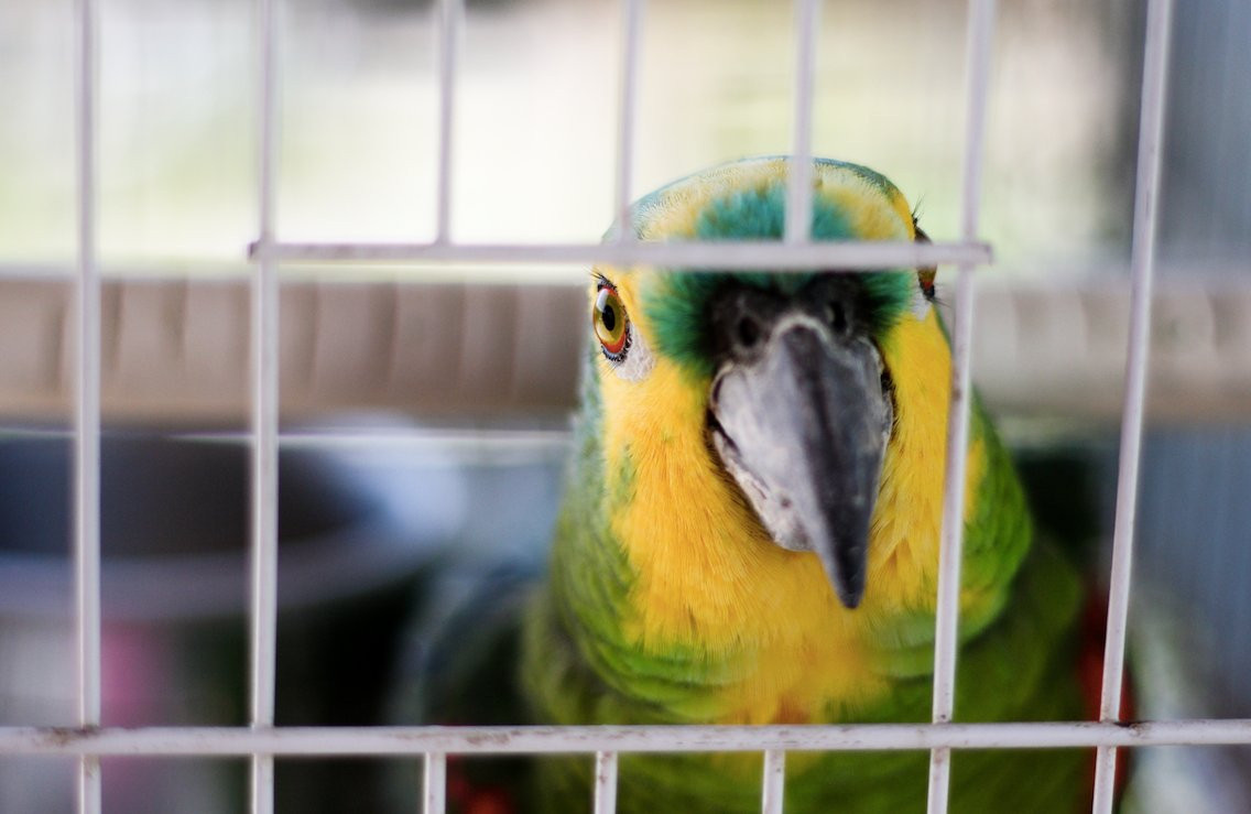 Western Michigan woman convicted of murder in parrot case