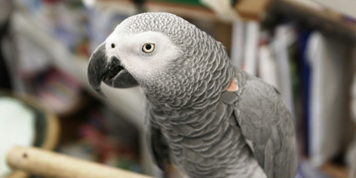 'Don't (expletive) shoot': Michigan woman convicted of murder in parrot witness case