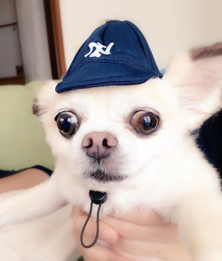 朝から地獄😫💦💦💦新作登場の #犬の野球チーム まるで #ちびまる子ちゃん の #永沢くんあーちゃん 似合わなすぎだょ😂