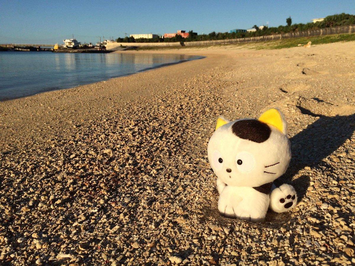 夏の夕暮れ、タマは与那国島のナンタ浜でのんびり過ごしました。一週間の終わり、一緒に肩の力を抜いてリラックスしませんか?