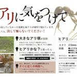 Government to alert public to fire ant dangers as Japan's summer holidays start