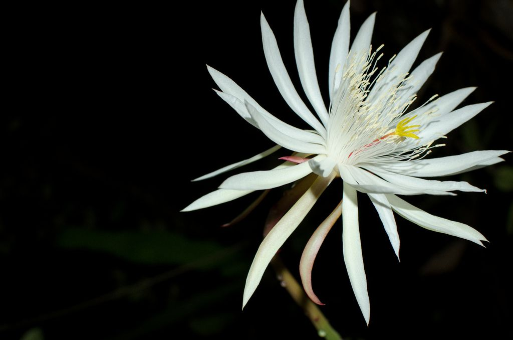 Most beautiful flowers in the world!  This particular flower is found only in Sri Lankan forests and it blooms only at nighttime. https://t.co/1Ieub1KmlZ