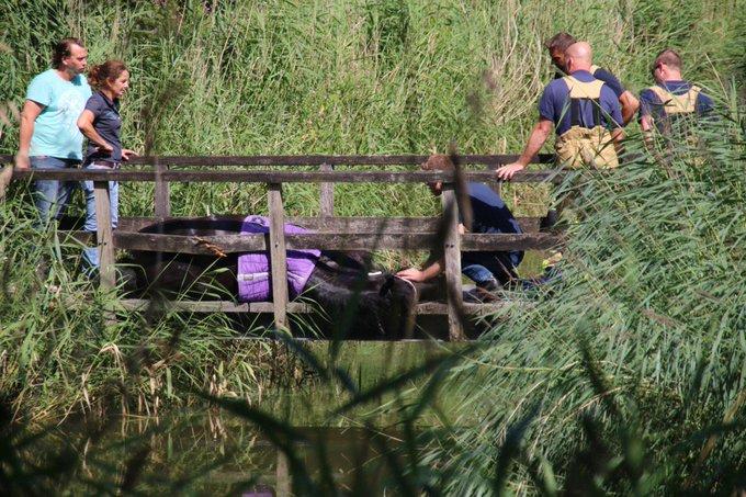 Nog een foto met merrie die op de brug is uitgegleden. Brandweer gaat beginnen met reddingswerk. https://t.co/NoCWVQB8mS