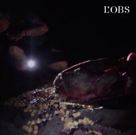 À Mayotte, des tortues massacrées et des militants de Sea Shepherd agressés