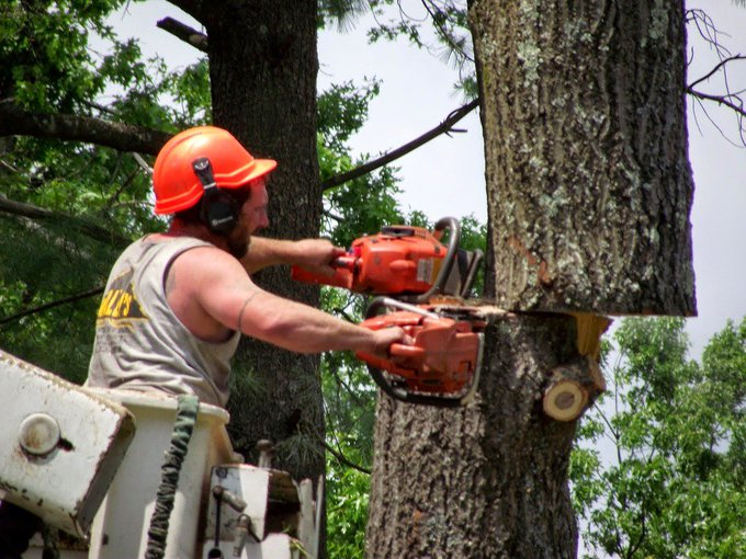 #TorontoTreeRemoval offers a number of tree services in the #GTA Services areas here: https://t.co/adUAVGjKqx https://t.co/v7B9EdvY1w