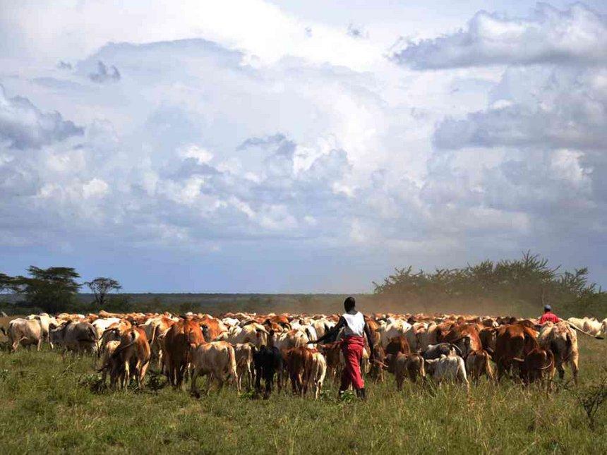 Police reservist shot dead in cattle raid near Samburu GSU camp