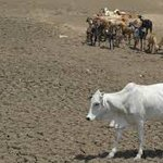 Madhya Pradesh farmer booked for killing cow that strayed into his land