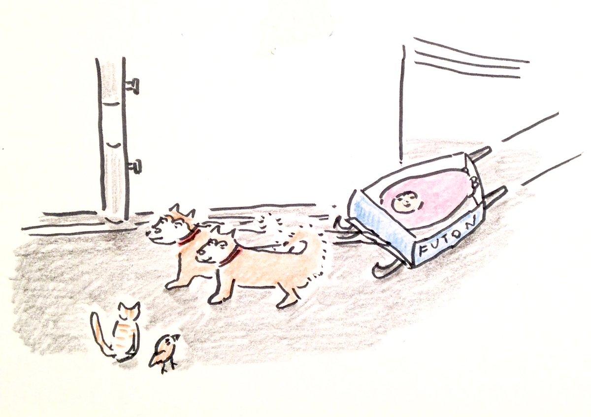 7/23 今日は ドッグデイズ はじまりの日です。犬ぞりで出発 ふとんで寝てる人。