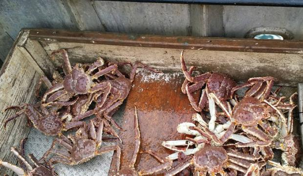 Fish and Game opens red king crab fishing off Juneau next week