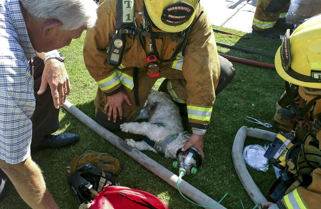 California firefighters rescue a nearly dead dog, bring him back to life