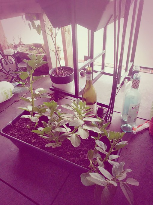 @Damiantheomen Right now most of my plants are sleeping for winter but my new beans are growing fast