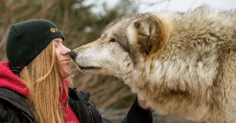 Scientists find key 'friendliness' genes that distinguish dogs from wolves