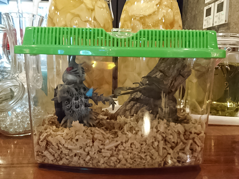 新橋怪獣酒場の虫かごの中にすごい虫たち(虫…?)がいた。流石怪獣酒場