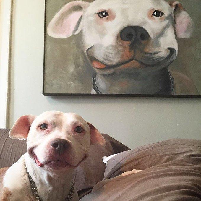 RT @BabyAnimalPics: Smiling pitbulls rt if you agree https://t.co/rjINQuUALB