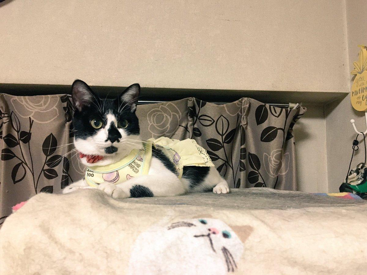 しずくちゃん、不自然なくらいタワーの端っこに😄待ち人来らず…。今週もよろしくお願いします♡#猫好きさんと繋がりたい #c
