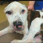 'Puppy Doe' torture case to begin this week