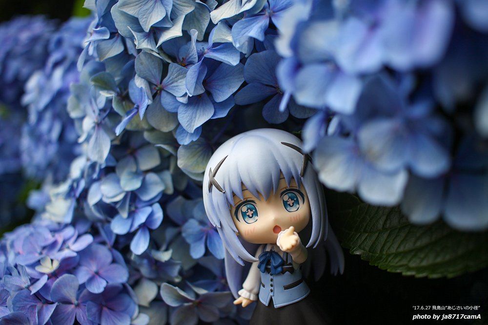 個人的にはチノちゃんには紫陽花が似合うと思う #お出かけチノちゃん #ごちうさ #ねんどろいど