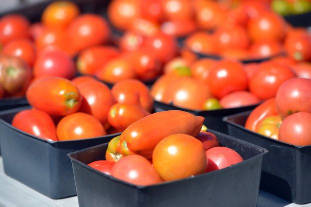Massachusetts Department of Agriculture to hold statewide tomato contest