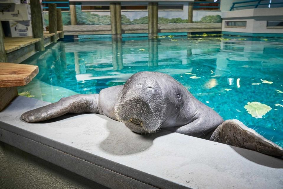 The world's oldest captive manatee dies in South Floridamuseum