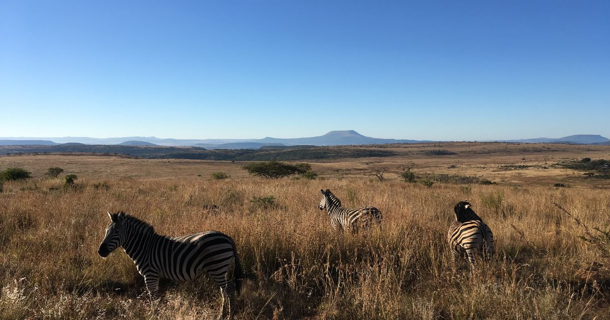 Sharks, safari and stunning scenery - the magnificent KwaZulu-Natal in South Africa