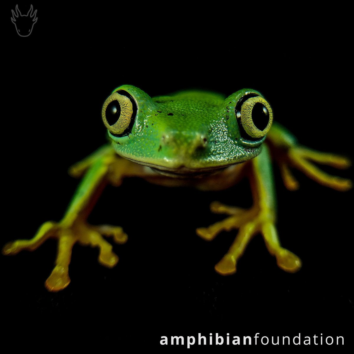 Amphibian Foundation
