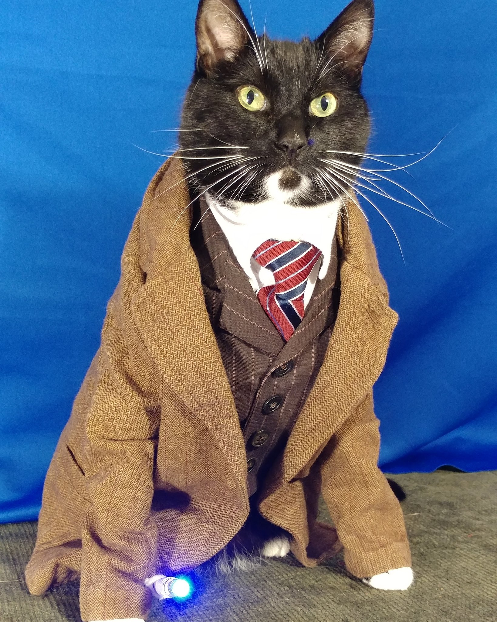 'Now, first things first. Be honest. How do I look?' ~ The Doct'purr  #DrWho #10thDoctor https://t.co/65k7FItObD