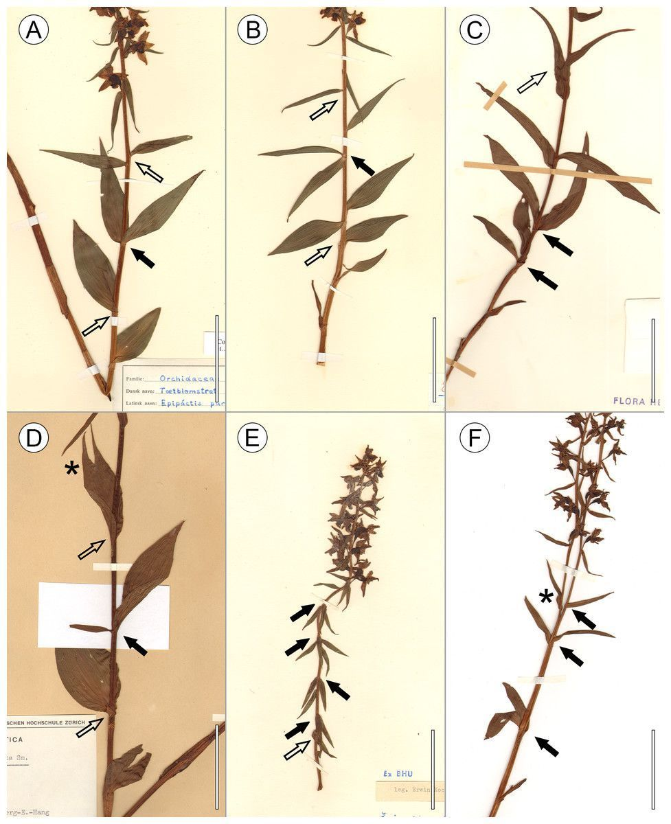 test Twitter Media - New in #PlantScience: Leaf arrangements are invalid in the taxonomy of orchid species https://t.co/Le6vMsbH32 https://t.co/HytKCORJpl