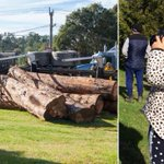 Three-year-old photographer Vedra Liston takes pictures of Healesville truck rollover