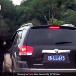 Watch: Tourists Stunned As Bear Pokes His Head Inside Their Car