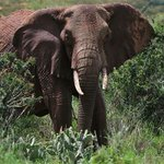 Elephant kills handler in Zimbabwe resort town