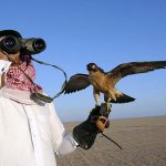 'Qataris among foreigners issued houbara hunting permits'