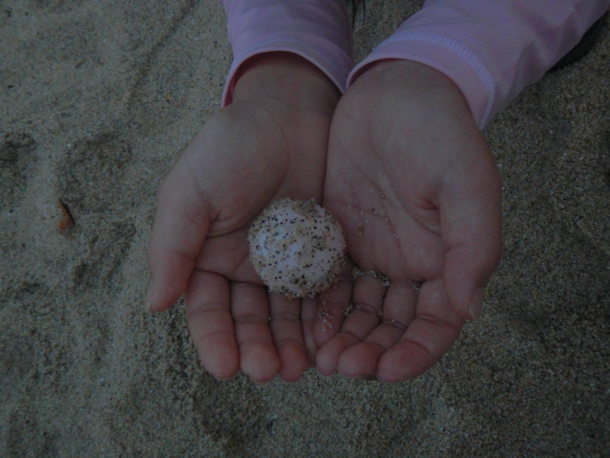 #屋久島 de 海がめえる^^・・・ウミガメさん・産卵した #たまごっち^^・ #たまご #ウミガメ #子ども #赤ちゃ