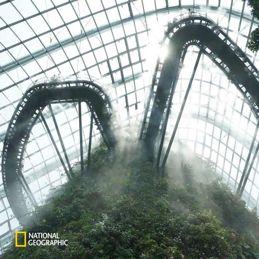 #NG오늘의포토 '구름 숲'이라 불리는 이 싱가포르의 정원은 무척 독특한 구조를 가지고 있습니다. 엘리베이터를 타고 건물 위의 공중 다리까지 올라가면 관람객들은 모든 각도에서 식물을 바라볼 수 있게 만들어져 있죠. https://t.co/ASbS3aUVDJ