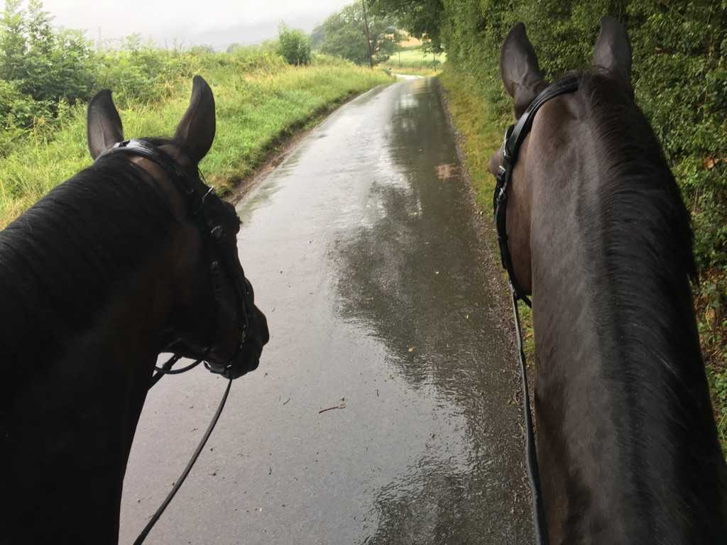 A drenching for Blueberry & Barney yesterday! Even Olympic horses go hacking in the rain! #drownedrats https://t.co/dGEqubQlZR