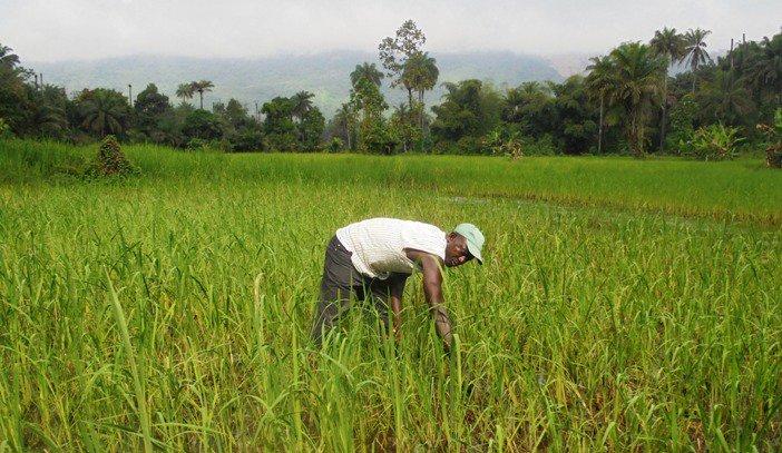 La Guinée obtient de la BID 47 millions de dollars pour soutenir sa filière agricole