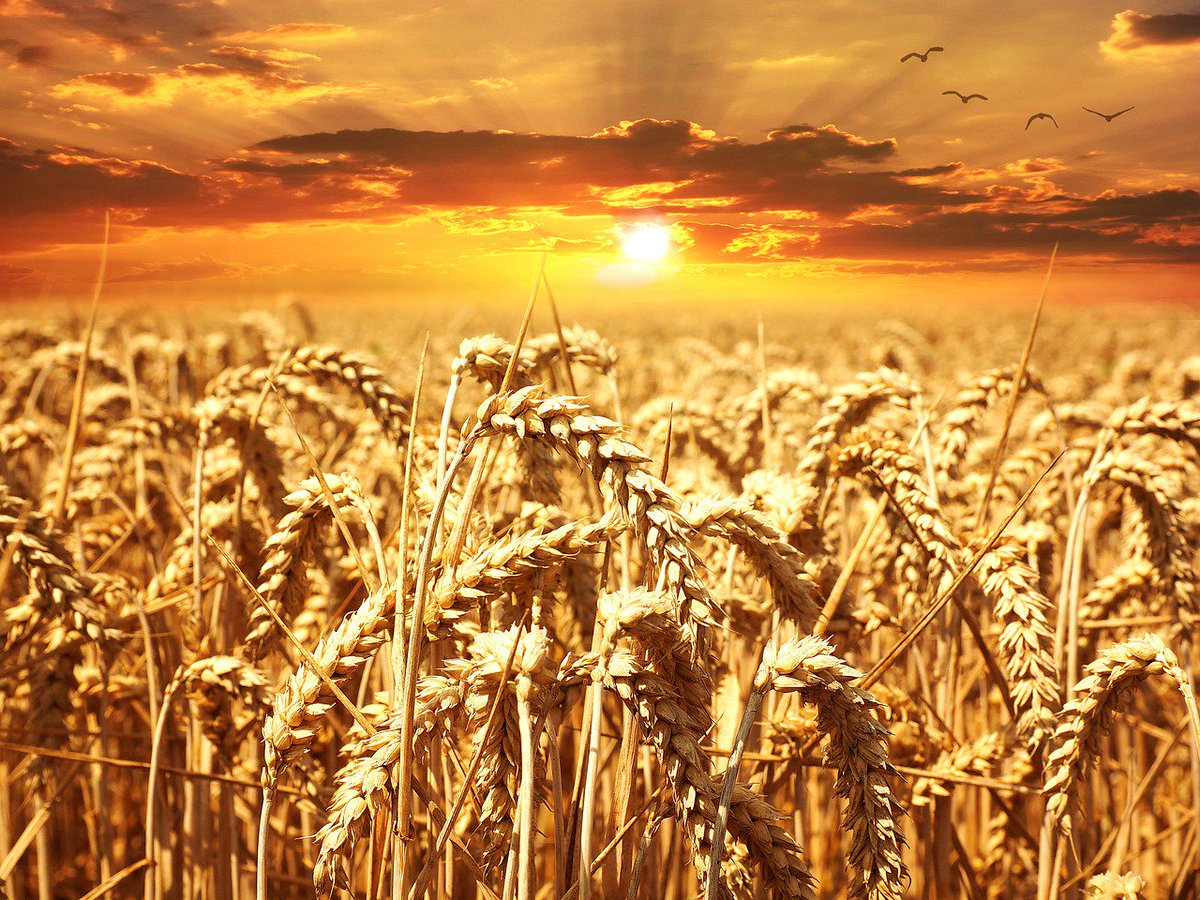 test Twitter Media - This research uncovered an important link to a disease which if left unchecked can be devastating for #wheat https://t.co/9VPnO42dLw https://t.co/ynw4faqDVO