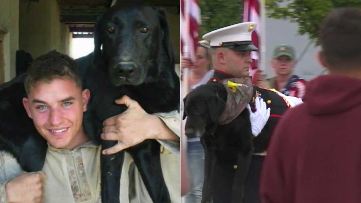 HERO'S FAREWELL Marine K-9 with terminal cancer gets tear-filled sendoff