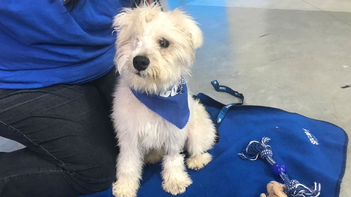 Say hello to Ellie, a 6-month-old terrier mix who needs a loving home