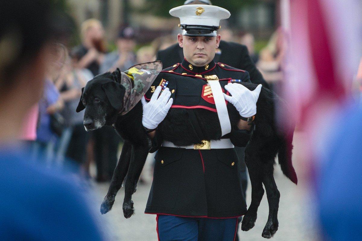 Centenas se despedem de cão fuzileiro dos EUA que serviu 3 vezes no Afeganistão 😭 💔#G1