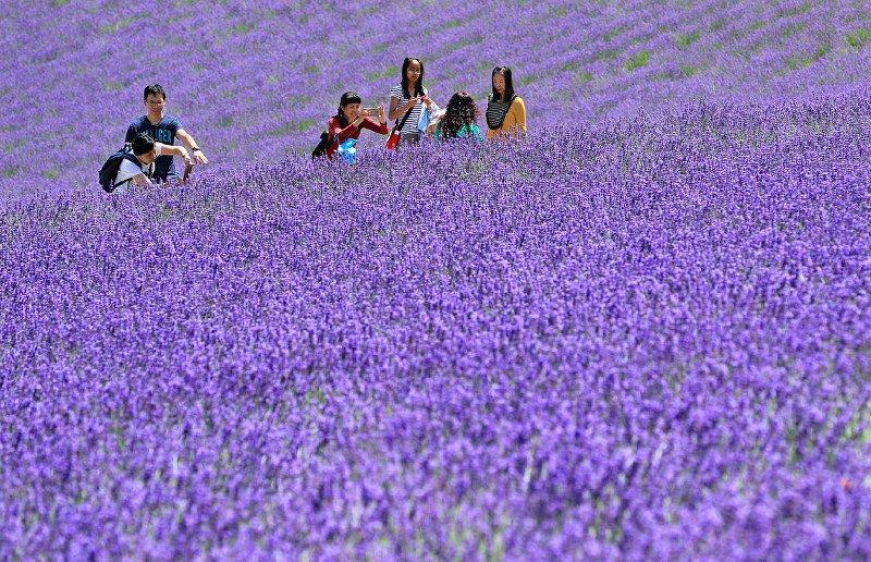 Photo Journal: Purple patch