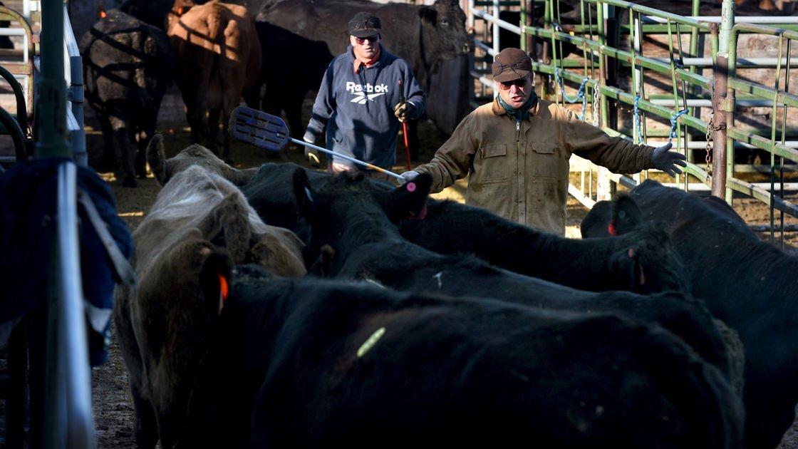 Farm earnings took 'gigantic' drop in Montana in 2016