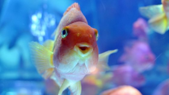 Fish sauced? Goldfish turn to alcohol to survive icy winters