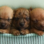 Itty-Bitty Shelter Puppies Get Their Own Newborn Photoshoot, Might Be Cuter Than Babies
