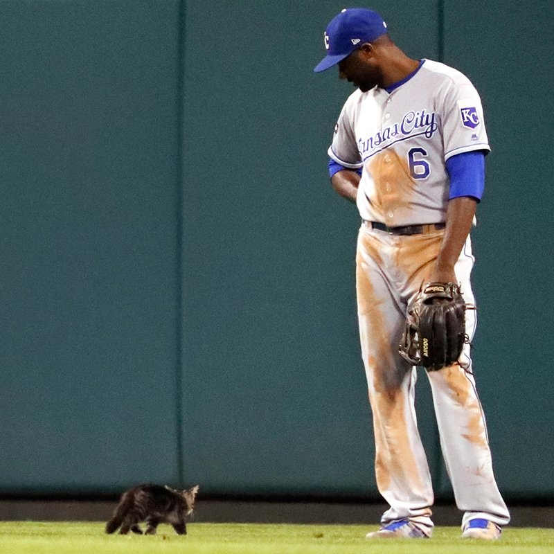 """Come here often?"" - Lorenzo Cain. ""I dabble in baseball."" - #RallyCat. https://t.co/ZmWyEn9UNr"