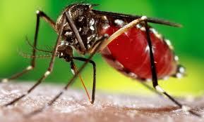 Dengue epidemic under control-Health Minister