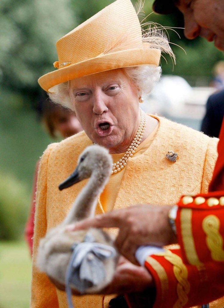 test Twitter Media - RT @tommicboy: Whoever keeps photoshopping Trumps face on the queen needs to stop! Dying 😂😂😂 https://t.co/xBJmDl2ABx