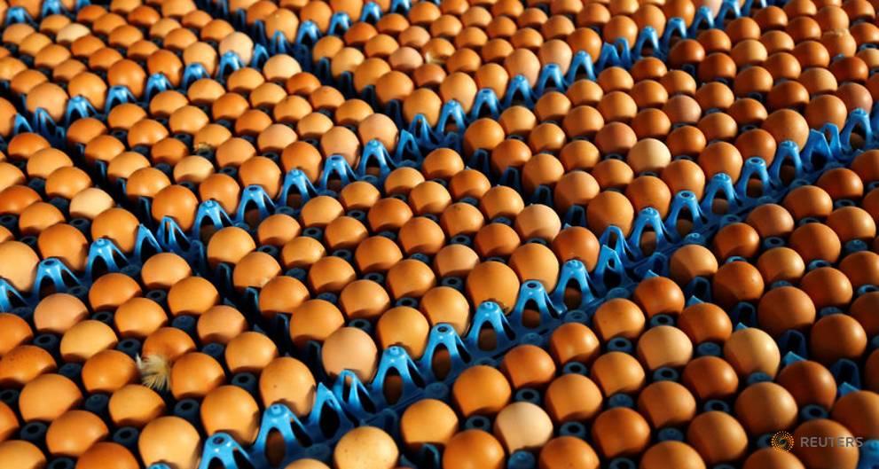 Dutch, Belgian police conduct raids in contaminated eggs case