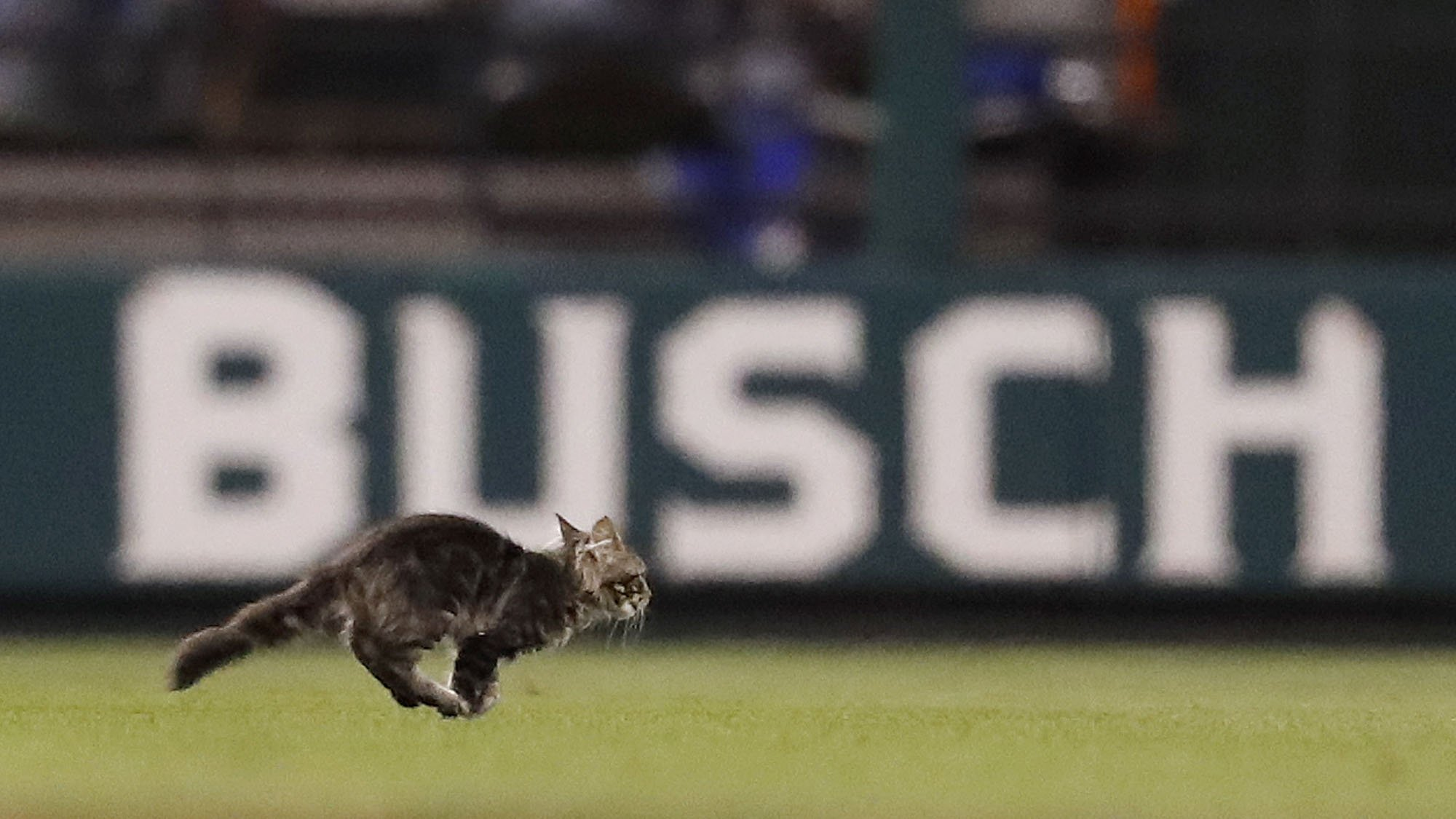 While you were away, #RallyCat earned a call-up to the @Cardinals. https://t.co/HG0WK6tLCV https://t.co/Kn8t9BTfTz