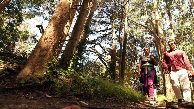 Why you should be forest bathing (and we don't mean shampoo)